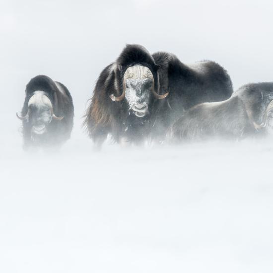 Ep.02 / La photo animalière et ses dérives (avec Martin Dellicour)